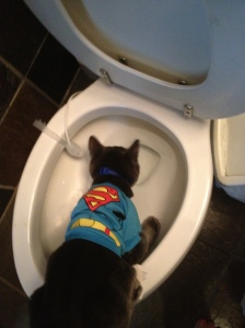 Super Kitty suffers Halloween payback