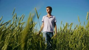 stock-footage-handsome-young-man-walking-in-wheat-field-at-summertime